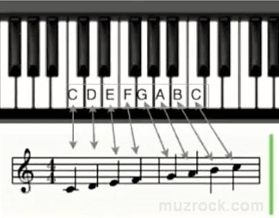 Как нужно писать ноты белых клавиш фортепиано на нотном стане